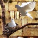 En el Jardín de la Paz – Rabino Shalom Arush